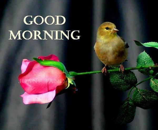 Bon mardi matin B094c619-4281b5b