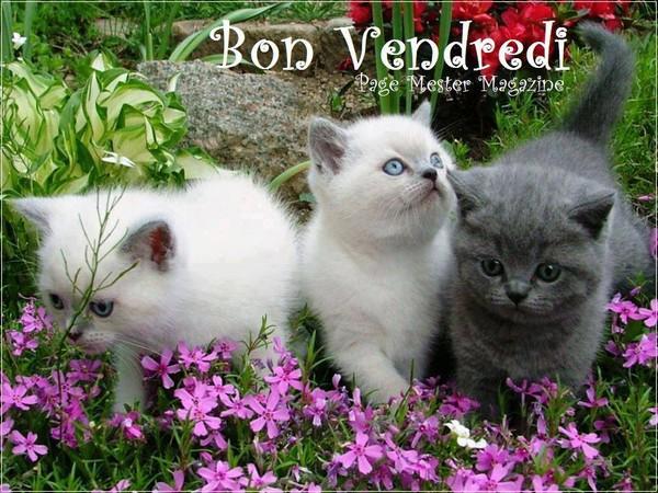 BONNE JOURNEE DE VENDREDI 120dc5a4-4339a63