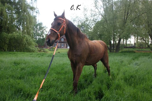 8 ans d'équitation..♥ - Page 7 Img_6816-copie-3e09437