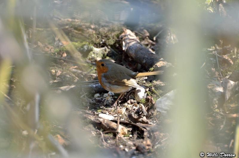 oiseaux de mon jardin Dpp_-oiseaux-3--0015-418ee52