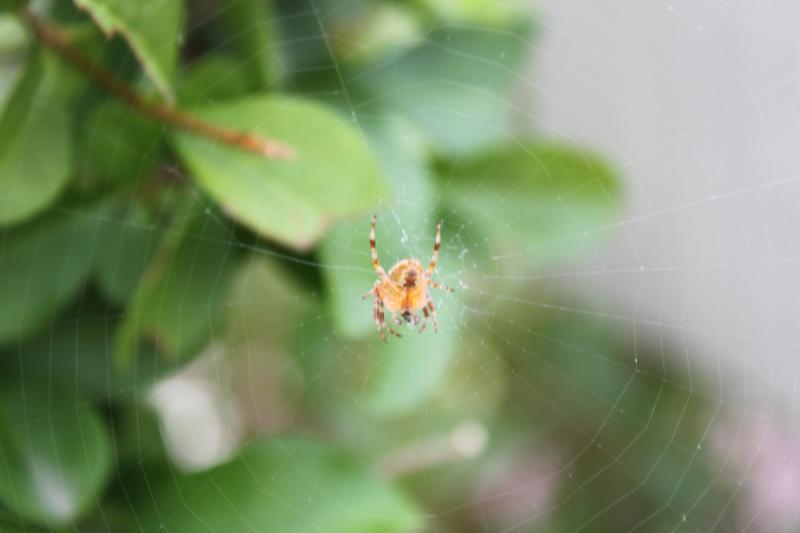 Des araignées Img_2133-1--3fe9469